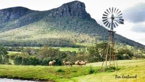 Granja australiana de las ovejas Fotos de archivo libres de regalías