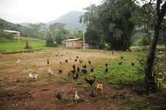 Granja avícola en el Brasil meridional fotografía de archivo libre de regalías