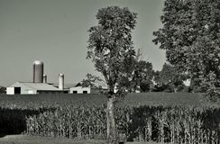 Granja blanco y negro Foto de archivo