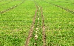 Granja/campo del trigo en un d?a soleado brillante Imágenes de archivo libres de regalías
