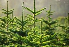 Granja de árbol Imágenes de archivo libres de regalías