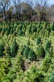 Granja de árbol de navidad Imágenes de archivo libres de regalías