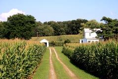 Granja de Amish Foto de archivo libre de regalías