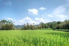 Granja de Cingjing, el condado de Nantou, Taiwán Fotografía de archivo libre de regalías