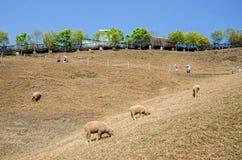 Granja de Cingjing en Nantou Taiwán Fotografía de archivo