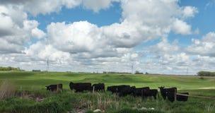 Granja de ganado fotos de archivo