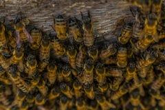 Granja de la abeja Imágenes de archivo libres de regalías