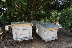 Granja de la abeja Fotografía de archivo