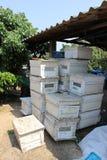 Granja de la abeja Imagen de archivo