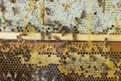 Granja de la abeja del primer Foto de archivo