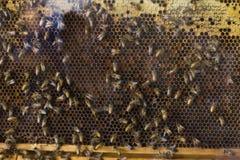 Granja de la abeja del primer Foto de archivo libre de regalías