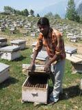 Granja de la abeja en la India Fotos de archivo