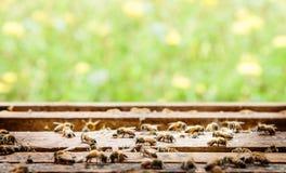 Granja de la abeja en un fondo de la caja y de la flor Foto de archivo libre de regalías