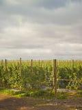 Granja de la fruta Foto de archivo libre de regalías