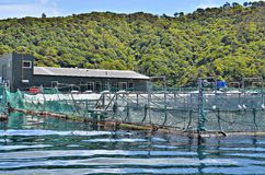 Granja de la ostra de Picton Foto de archivo