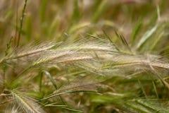 Granja de la planta de la naturaleza, granja del heno, fondo de la falta de definición imágenes de archivo libres de regalías