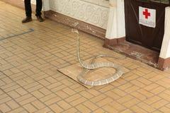 Granja de la serpiente Imagenes de archivo