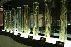 Granja de la serpiente Fotos de archivo libres de regalías