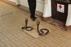 Granja de la serpiente Imagen de archivo libre de regalías