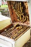 Granja de las abejas en Phrae, Tailandia Fotos de archivo