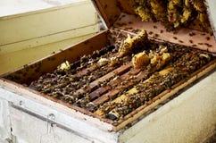 Granja de las abejas en Phrae, Tailandia Imágenes de archivo libres de regalías