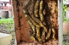 Granja de las abejas en Phrae, Tailandia Fotografía de archivo libre de regalías