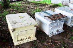 Granja de las abejas en Phrae, Tailandia Imagen de archivo