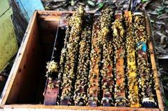 Granja de las abejas en Phrae, Tailandia Fotografía de archivo