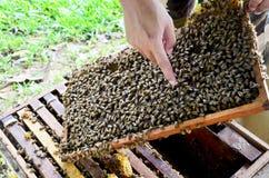 Granja de las abejas en Phrae, Tailandia Fotos de archivo libres de regalías