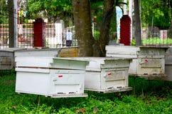 Granja de las abejas en Phrae, Tailandia Foto de archivo libre de regalías