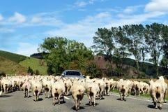 Granja de las ovejas Fotos de archivo libres de regalías