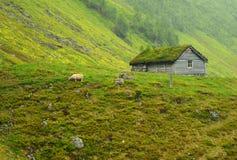 Granja de las ovejas Imagen de archivo libre de regalías