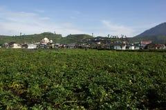 Granja de las patatas en Dieng, Indonesia Foto de archivo libre de regalías