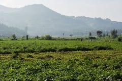 Granja de las patatas en Dieng, Indonesia Imagen de archivo