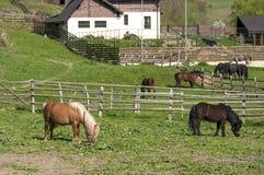 Granja de los caballos Fotografía de archivo