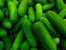 Granja de los pepinos fresca Foto de archivo libre de regalías