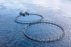 Granja de pescados en el r?o Hombres en el transbordador del barco la jaula con los pescados a un nuevo lugar imágenes de archivo libres de regalías