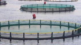 Granja de pescados en la bahía de Kotor almacen de video