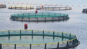 Granja de pescados en la bahía de Kotor metrajes