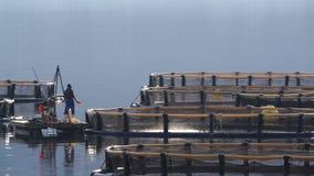 Granja de pescados en la bahía de Kotor almacen de metraje de vídeo