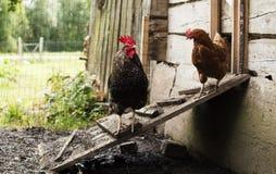 Granja de pollo Fotos de archivo libres de regalías