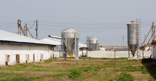 Granja de pollo con cuatro silos del almacenamiento del grano foto de archivo