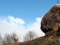 Granja de pollo y un cielo azul imagen de archivo libre de regalías