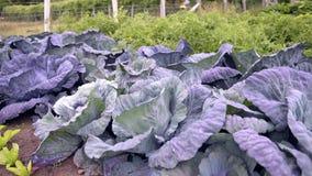 Granja de verduras almacen de video