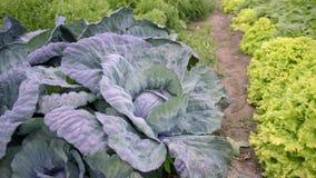 Granja de verduras metrajes