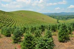 Granja del árbol de navidad Imágenes de archivo libres de regalías