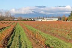 Granja del arándano del valle en Autumn Season fotos de archivo libres de regalías
