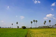 Granja del arroz Imagenes de archivo