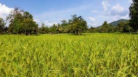 Granja del arroz Fotos de archivo