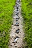 Granja del arroz Imagen de archivo libre de regalías